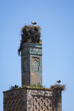 Nesting. Storks nesting on historic tower Royalty Free Stock Photos