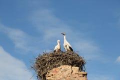 Nesting storks Stock Image