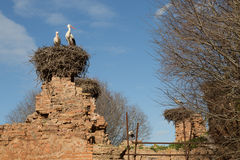 Nesting storks Stock Photos
