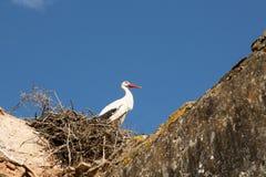 Nesting storks Stock Images