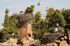 Nesting storks Royalty Free Stock Photography