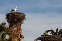 Nesting storks Royalty Free Stock Photo