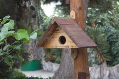 Nestle για το πουλί στο δέντρο στο πάρκο Στοκ εικόνα με δικαίωμα ελεύθερης χρήσης