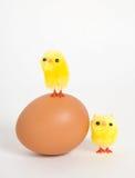 Nestling Imagens de Stock