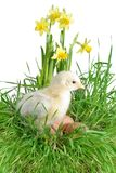 Nestling auf Gras Lizenzfreies Stockfoto