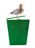 Nestling of bird (wagtail) on book Stock Photo