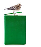 Nestling of bird (wagtail) on book Stock Photos