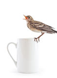 Nestling of bird (wagtail) on cup Stock Image
