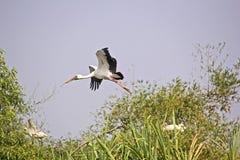 Nestling birds Stock Image