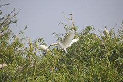 Nestling birds Royalty Free Stock Photography