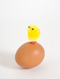 Nestling and a chicken egg Stock Photography