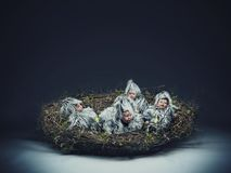 Nestling child. Conceptual photo of a nestling child stock photography
