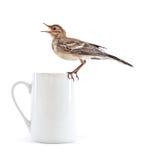 Nestling do pássaro (wagtail) no copo imagem de stock
