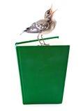 Nestling do pássaro (wagtail) no livro foto de stock