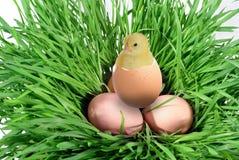 Nestling e escudo da casca de ovo Fotos de Stock