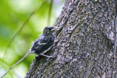 Nestling em um tronco de árvore imagens de stock