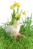 Nestling on grass Royalty Free Stock Photo