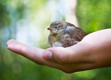 Nestling in the palm Royalty Free Stock Images