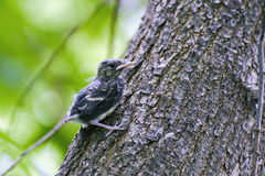 Nestling on a tree trunk Stock Images
