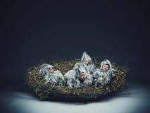 Nestlingkind stockfotografie