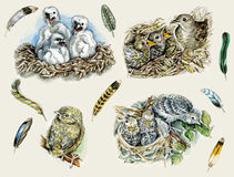 Nestlings. Feathers, birds  and nestlings  hand drawn in realistic vintage manner Royalty Free Stock Image
