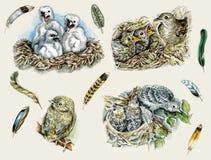 Nestlings Lizenzfreies Stockbild