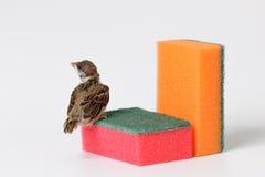 Nestlingsspatz mit einem Schwamm für waschende Teller, lokalisiert auf w Stockfotografie