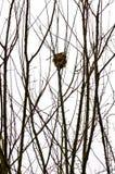 Nests Stock Photo