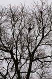 Nests Royalty Free Stock Photo