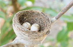 Nests and eggs on tree stock photo