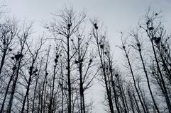 Nests on trees. Nests on the trees in autumn Royalty Free Stock Photo