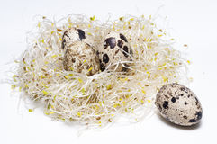 Nestsprösslinge Lizenzfreie Stockfotos