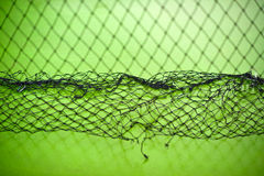 Net background Royalty Free Stock Image