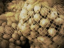 Net bag with little potatoes Stock Images