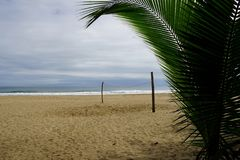 A net for beach volleyball ob the seashore sand seen from behind the branch of a palm tree.  royalty free stock photo