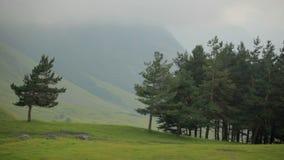 Net bos bij de voet rotsachtige bergen De wolken lopen over de hemel en gieten schaduwen Geschoten op Canon 5D Mark II met Eerste stock videobeelden