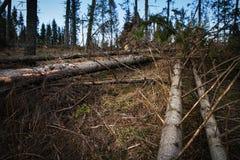 Net bos met gebroken bomen Stock Foto's