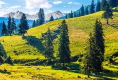 Net bos op een heuvel in Hoge Tatras Stock Afbeelding