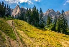 Net bos op een heuvel in Hoge Tatras Royalty-vrije Stock Fotografie