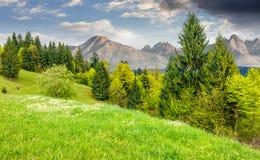 Net bos op een heuvel in Hoge Tatras Stock Foto