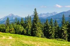 Net bos op een weide in Tatras Royalty-vrije Stock Foto's