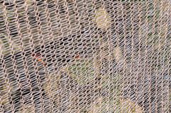 Net close up. For background outdoors white Royalty Free Stock Photo