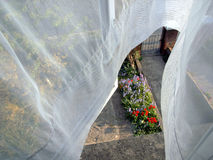 Net curtain reveals garden Stock Photos