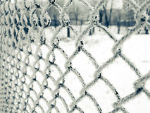 Net with frost. Fresh frost on the grid iron fence, winter Royalty Free Stock Photo