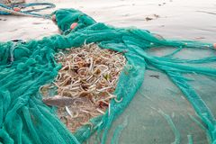 Net full of fish. Fishing net full of small fish landed on a sandy beach stock image