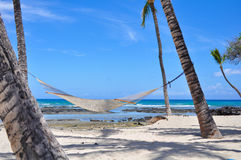 Net hammock attached to palm trees The Big Island Stock Images