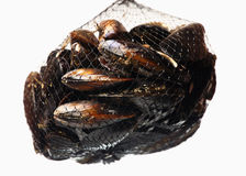 Net of mussels Stock Photo