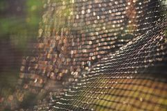 Net pattern under sunlight for wallpaper or background royalty free stock images