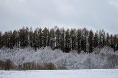 Net rood in de winter royalty-vrije stock afbeelding