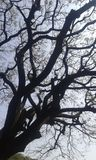 Net of tree branches Royalty Free Stock Image